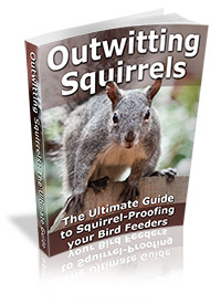Outwitting Squirrels: The Ultimate Guide to Squirrel-Proofing your Bird Feeders